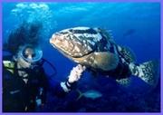 JT Touristik         Don Juan Beach Resort in Boca Chica
