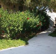 Hotel   Kos,   Rena Studios in Lambi  auf den Griechische Inseln in Eigenanreise