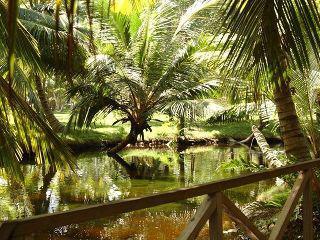 vtours Reisen         Grand Paradise Samana in Las Galeras