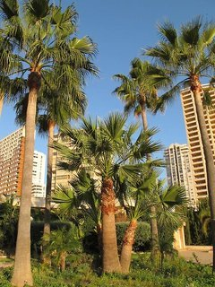 Pauschalreise Hotel Spanien, Costa Blanca, Vistamar Apartments in Benidorm  ab Flughafen Berlin-Tegel