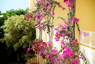 Pauschalreise Hotel Spanien, Fuerteventura, SENTIDO Buganvilla Hotel & Spa in Jandia  ab Flughafen Bremen