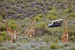 Pauschalreise Hotel Südafrika, Südafrika -  Inland, Madi Madi Karoo Safari Lodge in Oudtshoorn  ab Flughafen Frankfurt Airport