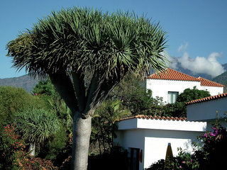 Pauschalreise Hotel Spanien, La Palma, La Plantacion Resort in Los Llanos de Aridane  ab Flughafen Basel