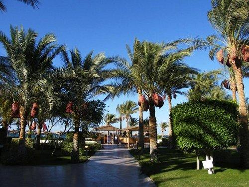 Highlights gültig für Buchungscode HRG575: Direkt am Strand Wellnessbereich Familienfreundlich  Allgemein: Das Hotel Palm Beach Resort befindet ...