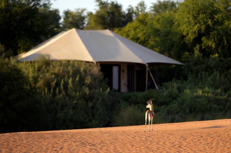 Al Maha a Luxury Collection Desert Resort und Spa